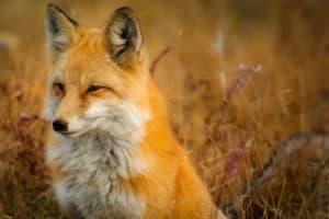 animal-canine-fur-cruelty