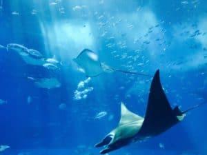 animals-aquarium-aquatic-fibres
